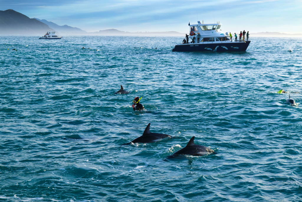 Swimming-With-Dolphins-Kaikoura